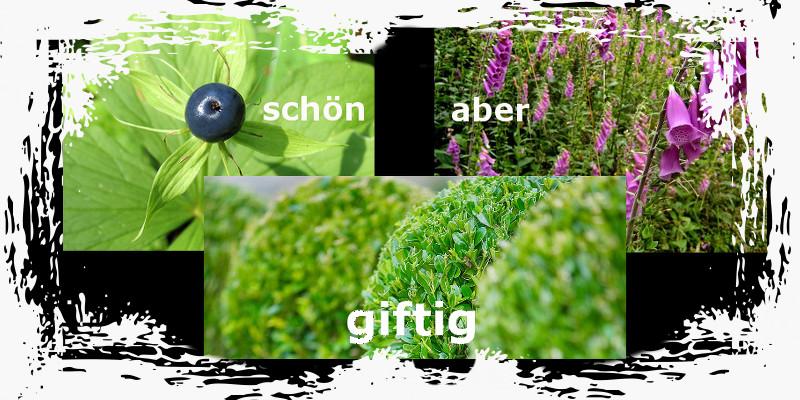 Canyoning Tessin Giftpflanzen